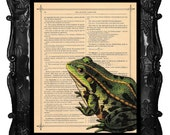 FROG art - frog art print - frog on antique book page music page frog dictionary art print