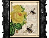 BUMBLE BEES and Yellow Roses Botanical Art Print artistically made on vintage dictionary page antique book page art print