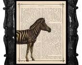Zebra Vintage Art Print Zebra Peeking Antique Book Page Artistic Book Art Print
