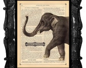 ELEPHANT Art Print antique dictionary page antique elephant illustration Wrinkles are Beautiful Art Print