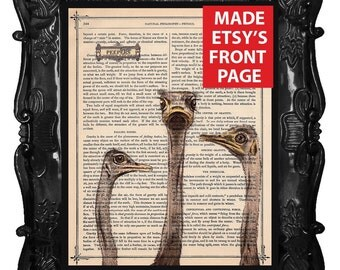Ostrich art print ostriches on antique book page or music page dictionary bird print