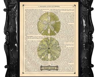 Beautiful Sand Dollar Art Print Dictionary Print Antique Book Page Art Print