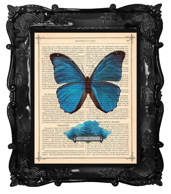FREE SHIPPING WORLDWIDE BLUE BUTTERFLY AND ROSES PRINT Summertime Blues on a Vintage 1883 Book Page