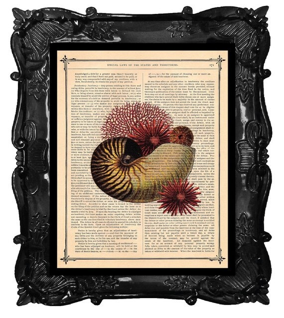 Sea Urchin and Nautilus Seashell Art Print on a antique book page dictionary art print