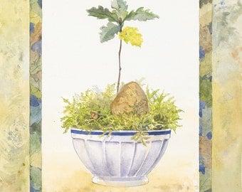 The Oak Seedling