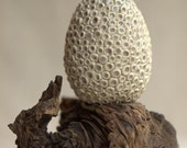 Egg.  Sculpted porcelain egg with cup fungus.