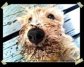 "Scottie Dog Greeting Card - ""Earth Dog"" - fine art photograph"