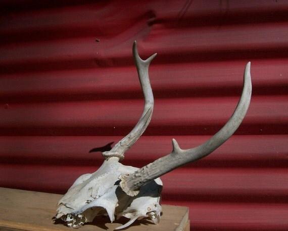 NJDEP Division of Fish & Wildlife - White-tailed Deer in ... |Wide Deer Wildlife