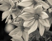 Flower art, Botanical Print, Black and white art, Floral wall decor, Fine art photography, Flower photo, Large print, Flower wall art