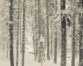 Winter Landscape Photography, Trees in the Snow, Nature Wall Art, Black and White Photography, Landscape, Large Wall Art, Winter Art