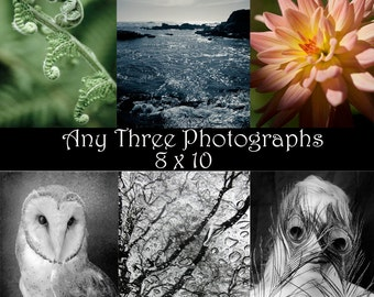 Discounted Print Set -You choose any three photographs 8x10