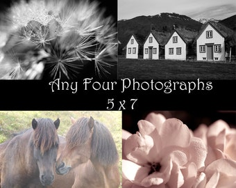 Photo print set discounted -You choose any four 5 x 7 photographs from my shop. Fine art photography, Nature wall decor, Animal art prints