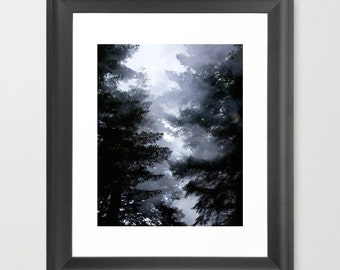 Nature photograph of trees - An Original Signed 8 x 10 Black and White Photography The Forest Mist
