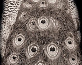 Peacock art, Fine art black and white nature photography, abstract feathers, art deco