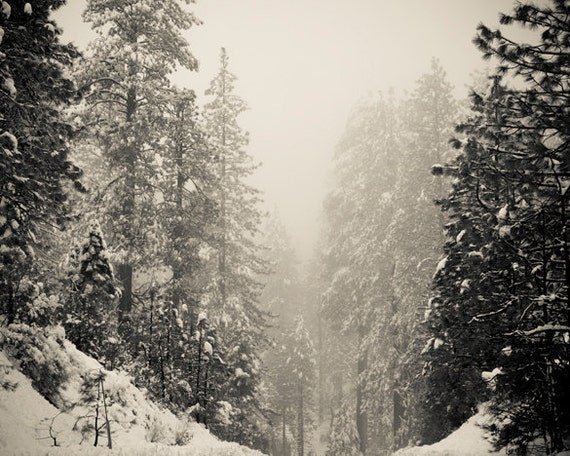 Black and White Photography, Winter Landscape Art, Trees in the Snow, Nature Art Prints, Winter Wonderland, Winter Decor