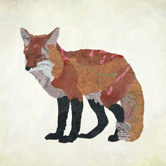 Virginia Red Fox