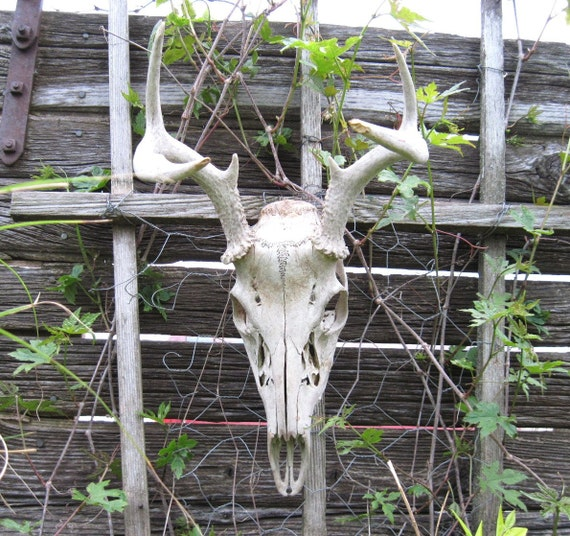 Deer antlers garden upcycled rustic and outdoor decor horns for Upcycled yard decor