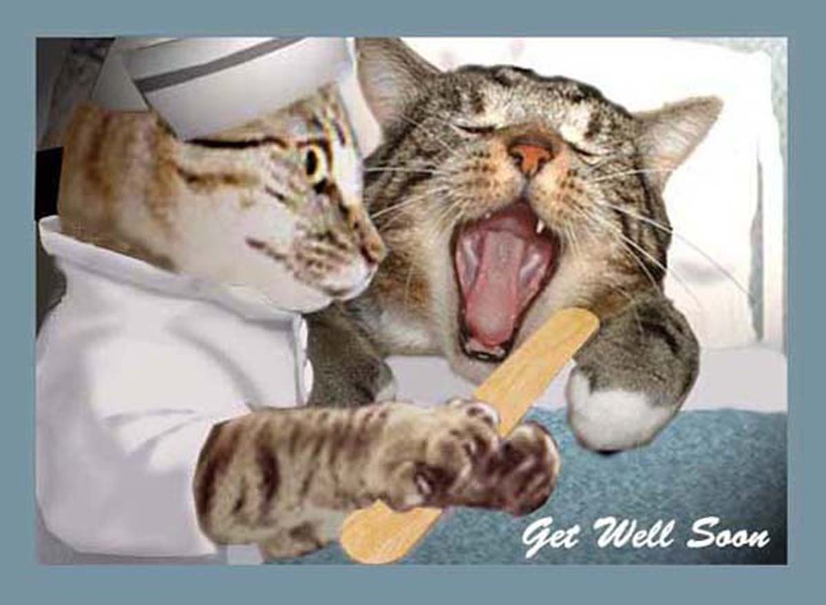 Items similar to Funny Get Well Cat Greeting Card\/Photo Art 5x7 card ...