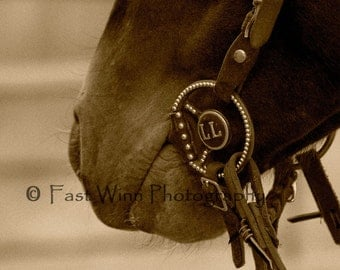 horse art equine fine art photograph Black and white sepia horse nose bit Mustang FastWinn Photography Tucson Arizona southwestern decor