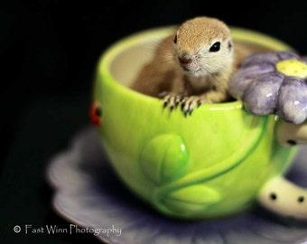Baby squirrel, baby animal photo, wildlife, wild animal photo, baby animal print, animal photograph, lime green, nursery wall art