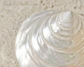Trochus Shell : summer beach sea shell photography sand ivory cream ecru california coastal home decor 8x10 11x14 16x20 20x24 24x30