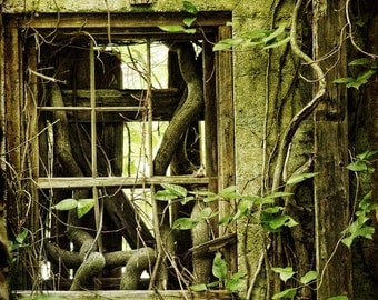 Come To My Window : woodland photography wood leaves green haunted tangled vine abandoned decay fairy tale 8x10 11x14 16x20 20x24 24x30