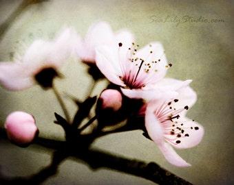Sakura : cherry blossom photography pink flower blossoms pink japan spring beauty garden home decor 8x10 11x14 16x20 20x24 24x30