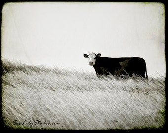 Cow photo 24x30 : black and white photography nature rural farm moo cattle ranch cowboy home decor