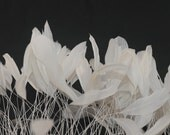 NEW Color - 12 IVORY Stripped  Coque Rooster Tail Feathers
