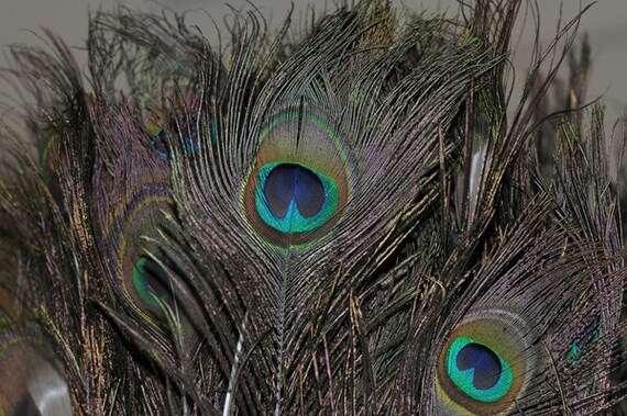 5 PCS - Full Eyes Peacock Feather