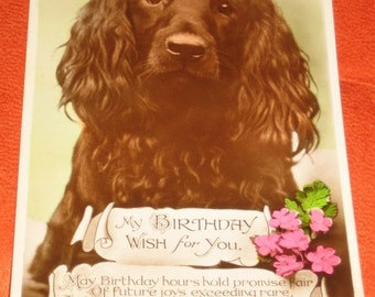 Vintage British Brown Dog My Birthday Wish For You Photographic Postcard
