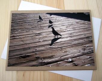 Sunset Beach Pier Pigeons Photography