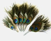Set of 5 Peacock and Ivory Leaf Boutonnieres - 1 Groom - 4 Groomsmen - FREE ringbearer boutonniere