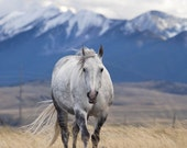 White Horse Photograph and Snowy Mountains, 7x5 Fine Art Photograph, Equestrian Art