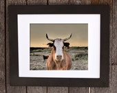 MOO, Animal Photograph, Unique Photograph, Cattle Art, Western Rugged Art