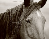 Horse Photograph, Black and White, Mystical Photography, Black Horse Animal Art, Summer Breeze, Size 8x12, Black and White Photography