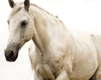 White Horse Photo, Monochromatic Photography, White Beauty, Fine Art Equestrian Photography