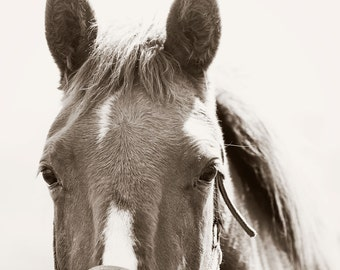 Beautiful Eyes, Horse Photography, Black and White Photography, Equestrian Art