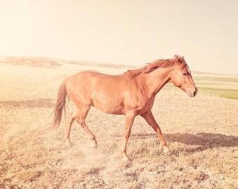 Sunny Days Horse Photograph, Size 8x12, Animal Photography, Equestrain Photo, Summer Art
