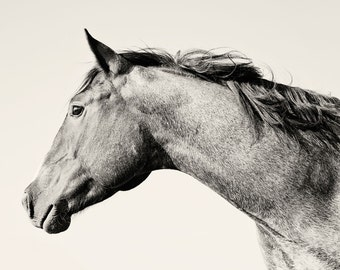 Animal Photography, Blowing Mane Horse Photo, Black and White Equestrian Photography, Horse Art