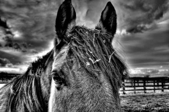 Horse and Storm 8x12 Fine Art photograph