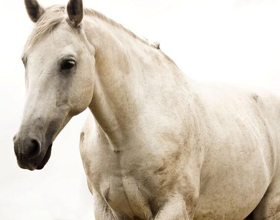 White Horse Photo, Monochromatic Photography, White Beauty, 8x10 print, Fine Art Equestrian Photography