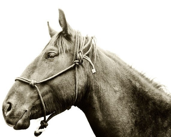 Custom Listing for JasMedoff, Horse and Halter Photograph