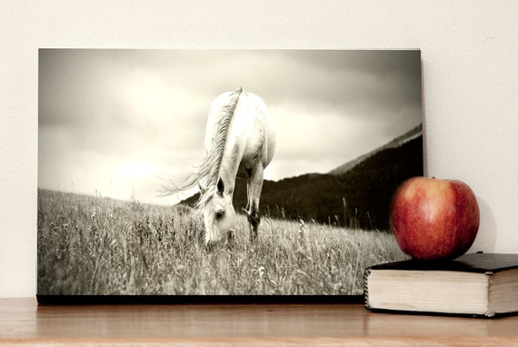 40% OFF SALE, Ready To Hang Horse Art, Black and White Photograph, size 8x12, Gallery Block