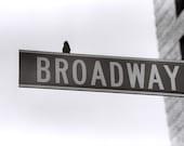 Bird On Broadway - 8x10 Fine Art Print