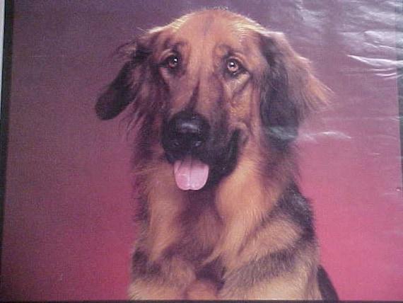 Original 1987 Strohs Beer Alex the Dog Poster