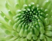 Flower Photograph 5x7