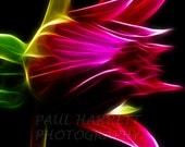 Flower Photography - Photo Art - Wall Art Deco - Fractal Abstract - 11 X 14  - Prints