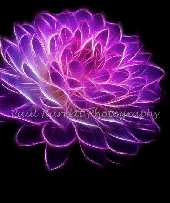 "Flower Photography - Photo Art - Fractal Dahlia - 20 x 24"" - Fine Art Photograhpy - photo catcher - Surreal - Paul Harrett"