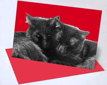Nuzzles and Purrs Valentine or Friendship
